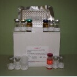 Leukotriene-C4-ELISA-Kit-LTC4-Mouse-KAMIYA-BIOMEDICAL-COMPANY-KT-58455