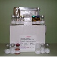 Secretory-Immunoglobulin-A-ELISA-Kit-SIgA-Guinea-Pig-KAMIYA-BIOMEDICAL-COMPANY-KT-55060