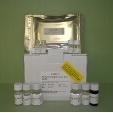 Luteinizing-Hormone-LH-ELISA-Kit-Rat-KAMIYA-BIOMEDICAL-COMPANY-KT-21064