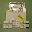 N-Terminal-Pro-Brain-Natriuretic-Peptide-NT-ProBNP-ELISA-Kit-Pig-KAMIYA-BIOMEDICAL-COMPANY-KT-32305