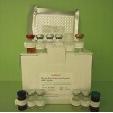 Brain-Natriuretic-Peptide-ELISA-Kit-BNP-Mouse-KAMIYA-BIOMEDICAL-COMPANY-KT-52051