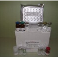 Parathyroid-Hormone-ELISA-Kit-PTH-Rat-KAMIYA-BIOMEDICAL-COMPANY-KT-51451