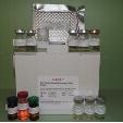 Tamm-Horsfall-Protein-ELISA-Kit-Rat-KAMIYA-BIOMEDICAL-COMPANY-KT-51613