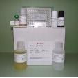 IgG-ELISA-Monkey-KAMIYA-BIOMEDICAL-COMPANY-KT-468
