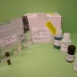 IgM-ELISA-Mouse-KAMIYA-BIOMEDICAL-COMPANY-KT-407