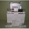 Heat-Shock-Protein-47-ELISA-Kit-HSP47-Mouse-KAMIYA-BIOMEDICAL-COMPANY-KT-58329