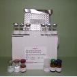 Probrain-Natriuretic-Peptide-ELISA-Kit-proBNP-Rat-KAMIYA-BIOMEDICAL-COMPANY-KT-59439
