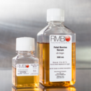 Fetal-Bovine-Serum-FBS-Rocky-Mountain-Biologicals-FBS-CBT-500ML
