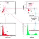 APO-DIRECT-Kit-Tonbo-Biosciences-TNB-6611-KIT