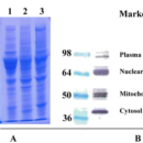 Minute-Total-Protein-Extraction-Kit-for-Adipose-Tissues-Cultured-Adipocytes-Invent-Biotechnologies-AT-022