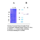 Minute-Protein-Extraction-Kit-for-Fixed-and-Embbeded-Tissues-Invent-Biotechnologies-FE-025