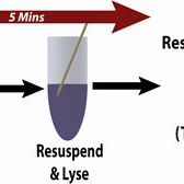 Plasmid-Screening-ToothPick-