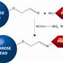 HOOK-Activated-Agarose-Amine-Reactive-