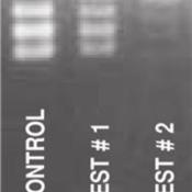 RNase-DETECT-