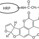 AFB1-Aflatoxin-B1-HRP-ImmuneChem-Pharmaceuticals-ICP1206