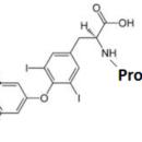 Thyroxine-T4-BSA-ImmuneChem-Pharmaceuticals-ICP1327
