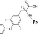 Triiodothyronine-T3-BSA-ImmuneChem-Pharmaceuticals-ICP1322