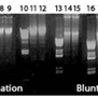 AccuPower-DNA-Ligation-PreMix-20-µl-0-2-ml-thin-wall-8-strip-tubes-with-attached-cap-96-ligations-Bioneer-K-7103