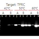 RocketScript-Reverse-Transcriptase-10-000U-50-reactions-Bioneer-E-3141