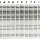 Tfi-DNA-Ligase-10-000-units-1-tube-5-ml-10-X-reaction-buffer-5-ml-1X-dilution-buffer-Bioneer-E-3112