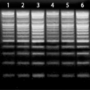 100-bp-DNA-Ladder-100-2-000-bp-250-µl-135-ng-µl-SALE-37-00-Bioneer-D-1030