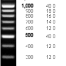 100-bp-DNA-Ladder-100-2-000-bp-1-250-µl-135-ng-µl-Bioneer-D-1031