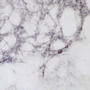 Methionine-Enkephalin-Antibody-ImmunoStar-20065