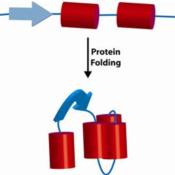 PROTEIN-Foldase-