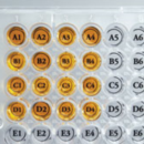 96-Well-Orienter-Stickers-50-pk-Diversified-Biotech-WEST-1000