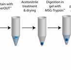 In-gel-digestion-and-extraction-of-silver-stained-proteins-for-mass-spectrometry