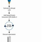 FOCUS-Signal-Proteins