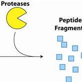 Fluoro-Protease-Assay