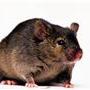 Mammalian-ProteaseArrest-