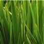 Plant-ProteaseArrest-