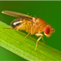 FOCUS-Insect-Proteome