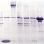High-Molecular-Weight-Transfer-Buffer-5X-