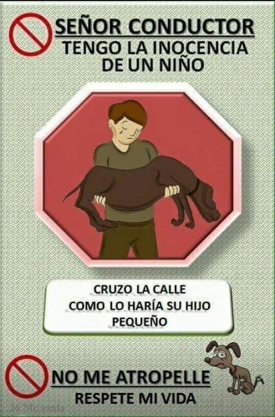 Urgente,  el cuidado de los animales callejeros