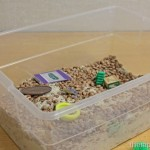 Sensory Search in Rice and Beans