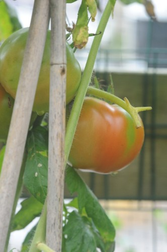 Vegetable Gardens can be both work and leisure activities.