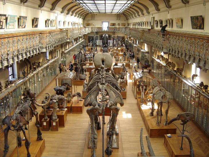 12. Museo Nacional de Historia Natural de Francia