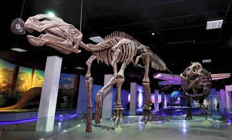 12. Museo de la Evolución