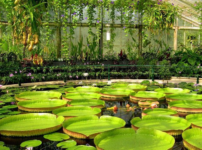 23. Real Jardín Botánico de Kew