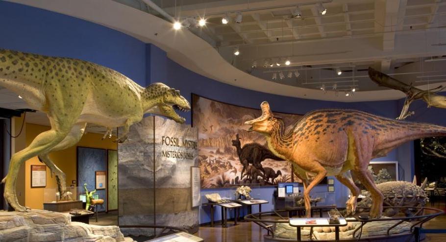 12. Museo de Historia Natural de San Diego