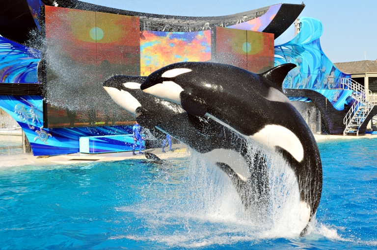 3. Sea World San Diego
