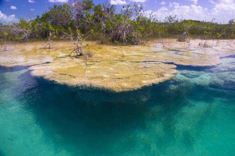 4. Los estromatolitos