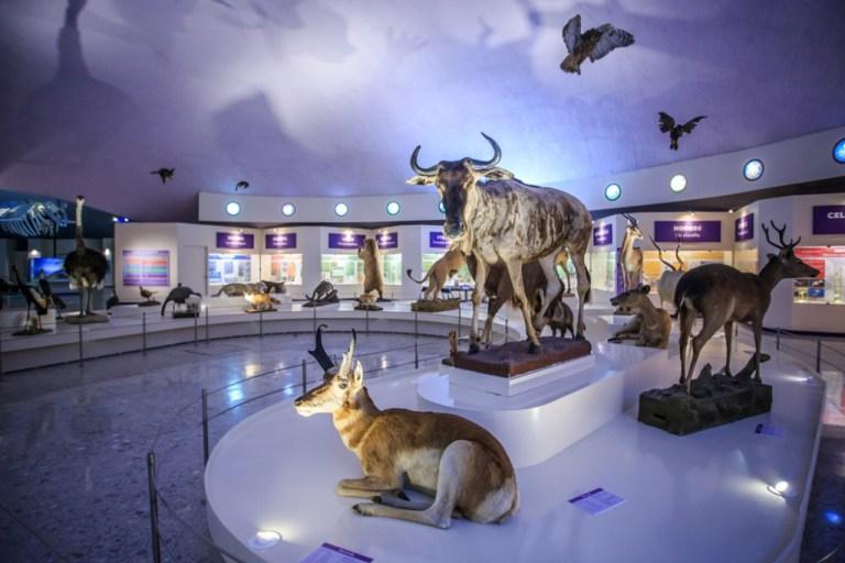 113) Museo de Historia Natural
