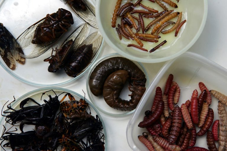 14. Insectos fritos