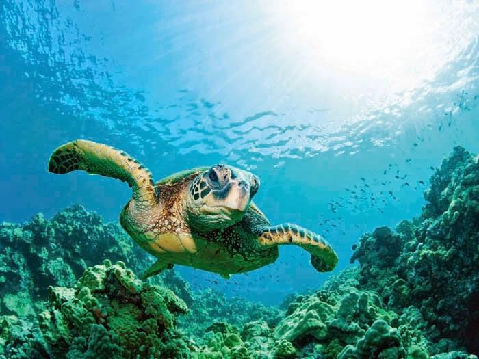 9. Akumal, Quintana Roo