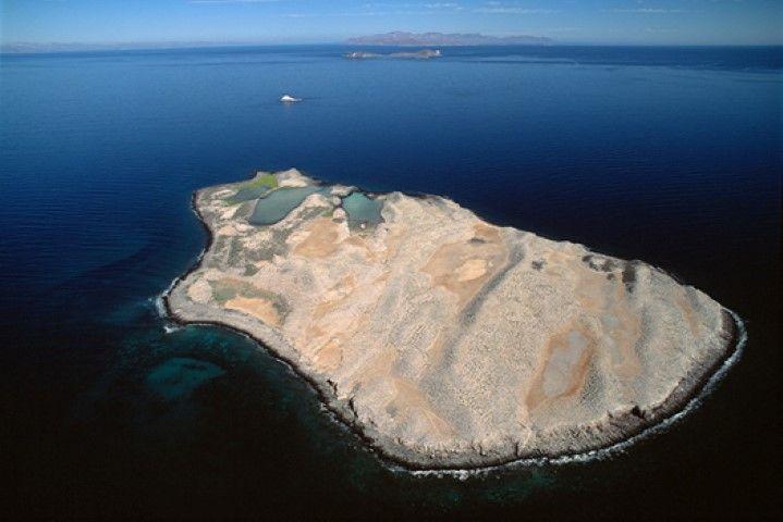 9. Islas Rasa y Tiburón, Mar de Cortés
