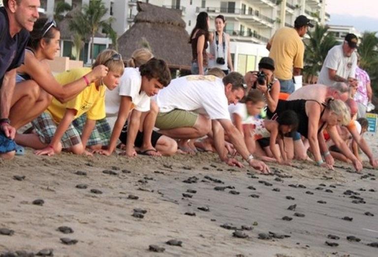12. Participa en el emocionante acto de liberar tortuguillos
